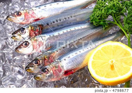 sardine, マイワシ