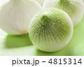 新たまねぎ 新タマネギ 新玉葱の写真 4815314