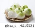 新玉葱 新タマネギ 新玉ねぎの写真 4815321