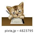 アメリカンショートヘアー 子猫 猫のイラスト 4823795