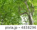 ぶな 樹木 森の写真 4838296