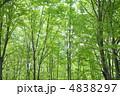 森 ブナ林 ぶなの写真 4838297