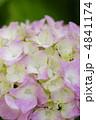 紫陽花 4841174