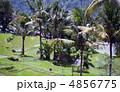 ライステラス ライス・テラス 椰子の木の写真 4856775