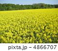 菜の花 4866707