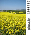 菜の花 4866757