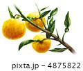 柚 ゆず 柑橘類のイラスト 4875822