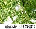 青葉 モミジ 紅葉の写真 4879838