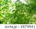 青葉 モミジ 紅葉の写真 4879841