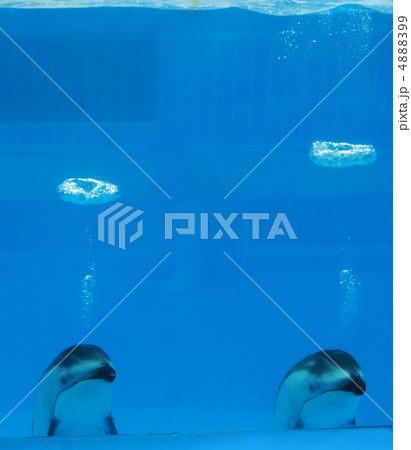 イルカのバブルリング 4888399