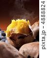 甘藷 唐芋 安納芋の写真 4888824