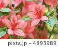 つつじ 躑躅 花の写真 4893989