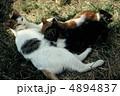 のら猫 ネコ ねこの写真 4894837
