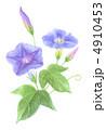 朝顔 アサガオ 花のイラスト 4910453