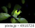 ホタルの光 4910728