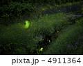 河川 ホタル 蛍の写真 4911364