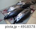 生本マグロ 4918378