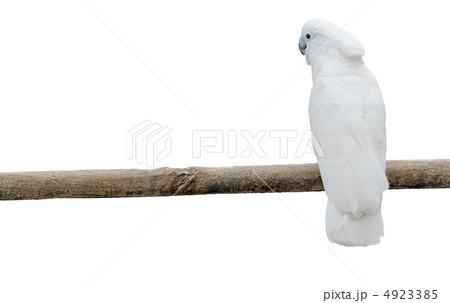 White parrots on a poleの写真素材 [4923385] - PIXTA