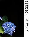 梅雨の花 あじさい アジサイの写真 4932252