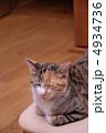 三毛猫 雌猫 猫の写真 4934736