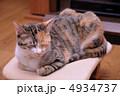 成猫 三毛猫 猫の写真 4934737