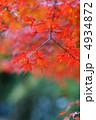 モミジ 紅葉 もみじの写真 4934872