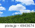 土手と雲 4943674