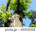 栗の木 4950568