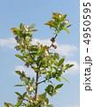 ブルーベリーの花 4950595