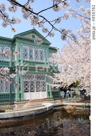 旧ハンター住宅と桜(王子動物園内の異人館) 4950762