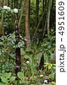 タケノコ 筍 成長の写真 4951609