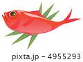 金目鯛 キンメダイ ベクターのイラスト 4955293