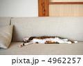 お昼寝 ソファー 昼寝の写真 4962257