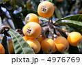 果実 ビワ フルーツの写真 4976769