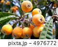 果実 ビワ 実の写真 4976772