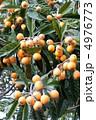 果実 ビワ 実の写真 4976773