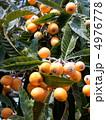 果実 ビワ 実の写真 4976778