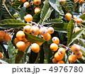 果実 ビワ 実の写真 4976780
