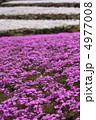 しばざくら しば桜 シバサクラの写真 4977008