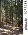 木々 樹木 杉林の写真 4977258