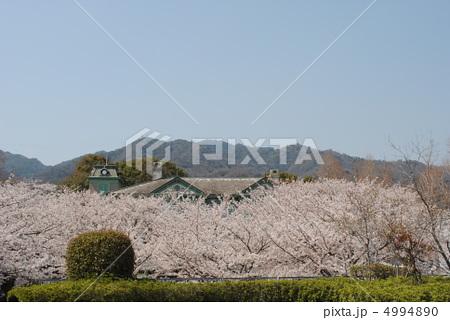 桜と旧ハンター住宅(王子動物園内の異人館)【背後に六甲山地】 4994890