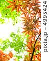 葉っぱ 楓 もみじの写真 4995424