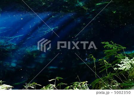 青池 十二湖(青森県) 5002350