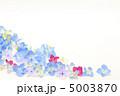 アジサイの花言葉は移り気 5003870