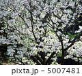 春の花木 5007481