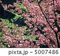 春の花木 5007486