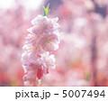春の花木 5007494