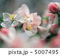 春の花木 5007495