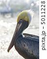 ペリカン 水 くちばしの写真 5011228