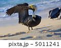 ペリカン 水 くちばしの写真 5011241